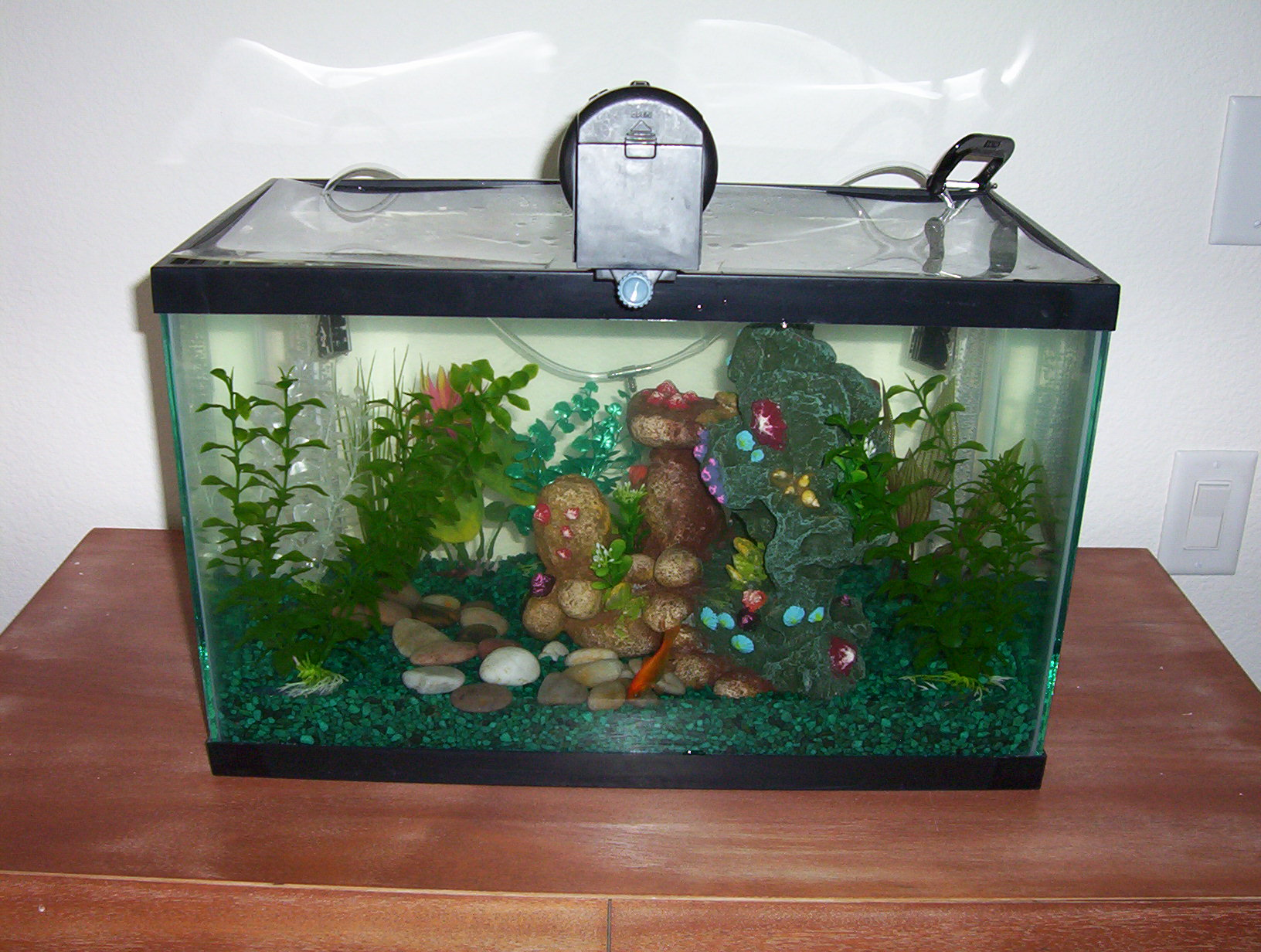 Spruced up the ol Fish Tank with some more stuff that Brandy got from ...